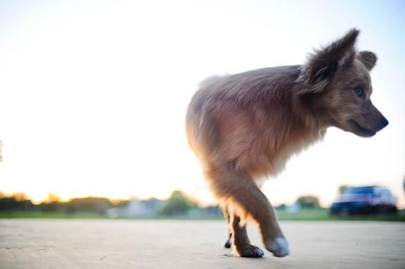 half-dog.jpg