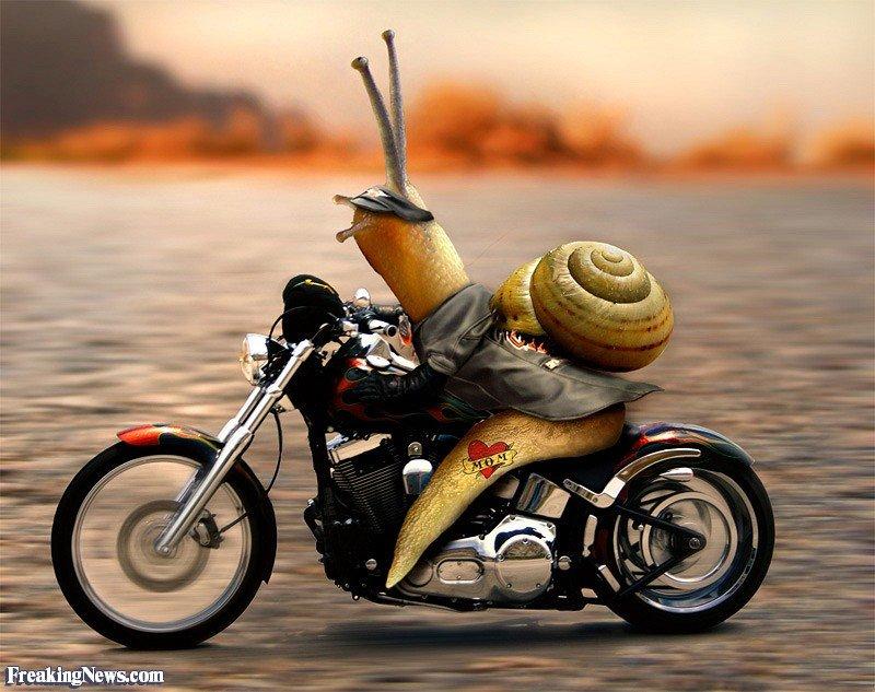 Snail-Riding-a-Motorbike-Born-to-be-Wild--38793.jpg