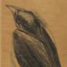 Raven Gray